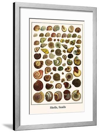 Shells, Snails-Albertus Seba-Framed Art Print