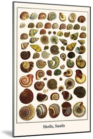 Shells, Snails-Albertus Seba-Mounted Art Print