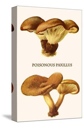 Poisonous Paxillus-Edmund Michael-Stretched Canvas Print