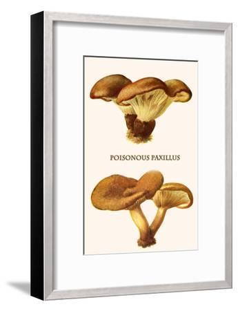 Poisonous Paxillus-Edmund Michael-Framed Art Print