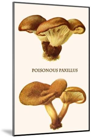 Poisonous Paxillus-Edmund Michael-Mounted Art Print
