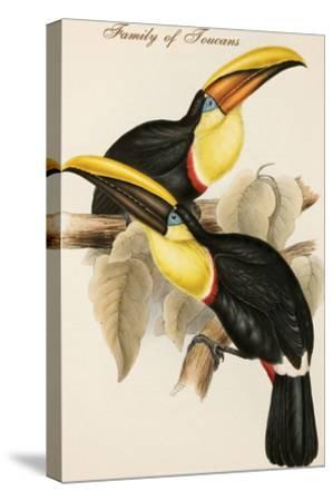 Family of Toucans-John Gould-Stretched Canvas Print