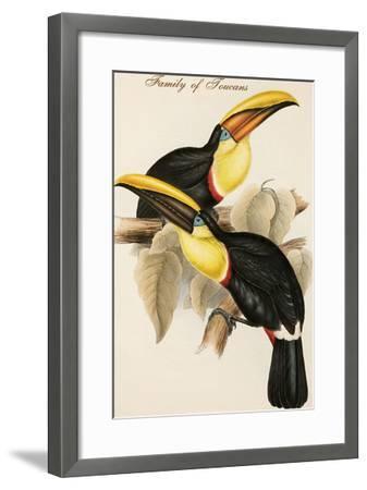Family of Toucans-John Gould-Framed Art Print