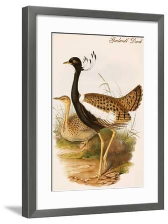 Gadwell Duck-John Gould-Framed Art Print