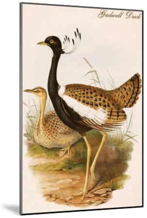 Gadwell Duck-John Gould-Mounted Art Print