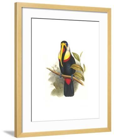 Inca or White Throated Toucan-John Gould-Framed Art Print