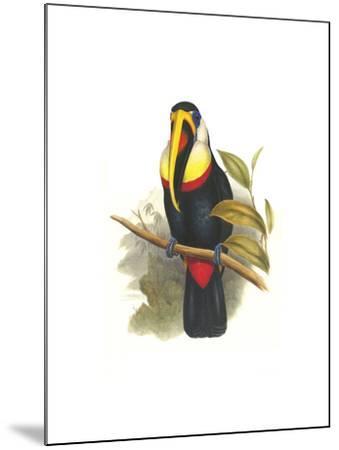 Inca or White Throated Toucan-John Gould-Mounted Art Print