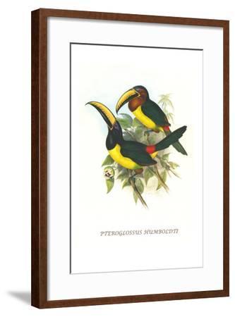 Lettered Aracari-John Gould-Framed Art Print