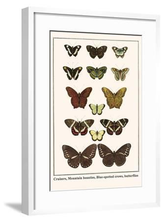 Cruisers, Mountain Beauties, Blue-Spotted Crows, Butterflies-Albertus Seba-Framed Art Print