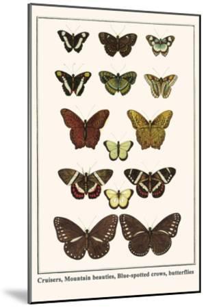 Cruisers, Mountain Beauties, Blue-Spotted Crows, Butterflies-Albertus Seba-Mounted Art Print