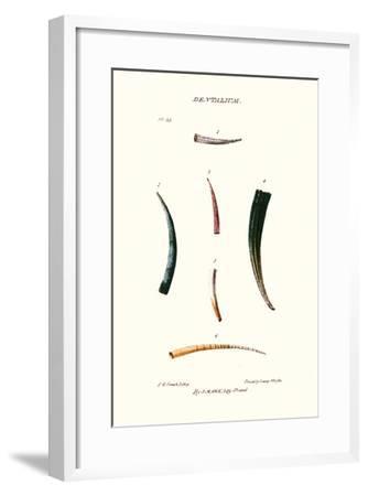Tooth Shells-John Mawe-Framed Art Print