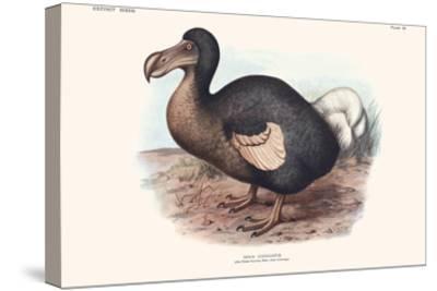 Didus Cucullatus, Dodo,-Lionel Walter Rothschild-Stretched Canvas Print