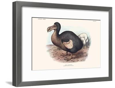 Didus Cucullatus, Dodo,-Lionel Walter Rothschild-Framed Art Print