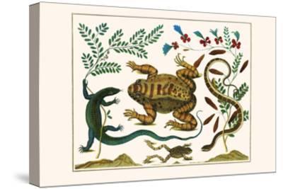 Toad, Lizard, Serpentes, Leopard Frog, Capers-Albertus Seba-Stretched Canvas Print