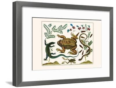 Toad, Lizard, Serpentes, Leopard Frog, Capers-Albertus Seba-Framed Art Print