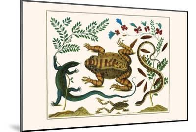 Toad, Lizard, Serpentes, Leopard Frog, Capers-Albertus Seba-Mounted Art Print