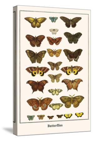 Butterflies-Albertus Seba-Stretched Canvas Print