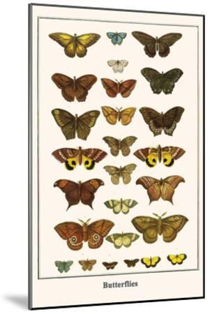 Butterflies-Albertus Seba-Mounted Art Print