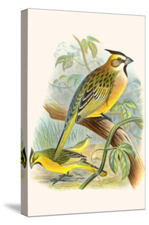 Green Cardinal-F^w^ Frohawk-Stretched Canvas Print