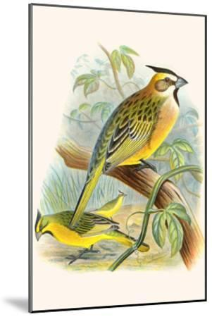 Green Cardinal-F^w^ Frohawk-Mounted Art Print