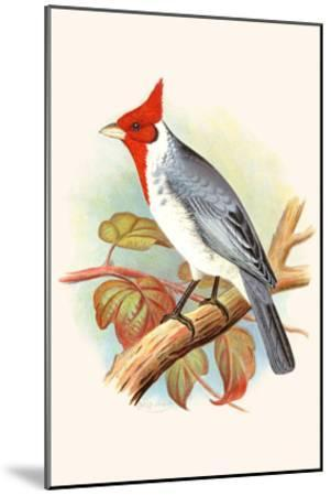 Red Crested Cardinal-F^w^ Frohawk-Mounted Art Print