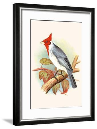 Red Crested Cardinal-F^w^ Frohawk-Framed Art Print