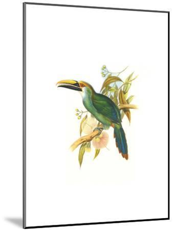 Wagler's Toucanet-John Gould-Mounted Art Print