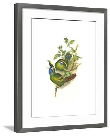Blue Throated Toucanet-John Gould-Framed Art Print