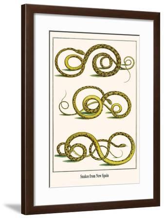 Snakes from New Spain-Albertus Seba-Framed Art Print