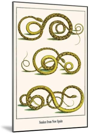 Snakes from New Spain-Albertus Seba-Mounted Art Print
