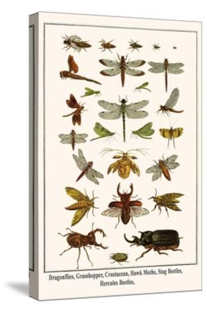Dragonflies, Grasshopper, Crustacean, Hawk Moths, Stag Beetles, Hercules Beetles,-Albertus Seba-Stretched Canvas Print