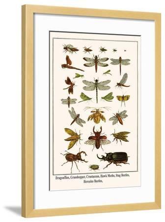 Dragonflies, Grasshopper, Crustacean, Hawk Moths, Stag Beetles, Hercules Beetles,-Albertus Seba-Framed Art Print