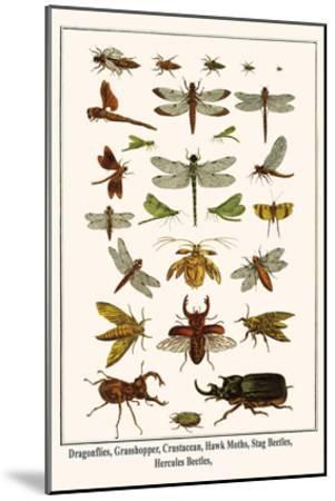 Dragonflies, Grasshopper, Crustacean, Hawk Moths, Stag Beetles, Hercules Beetles,-Albertus Seba-Mounted Art Print