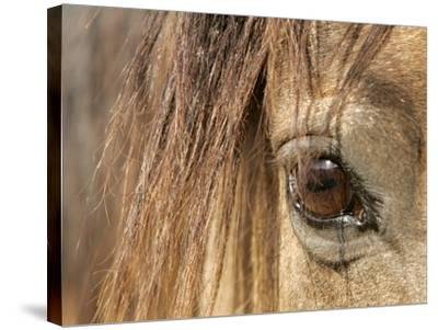 APTOPIX Mustangs Savior-Ann Heisenfelt-Stretched Canvas Print