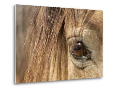 APTOPIX Mustangs Savior-Ann Heisenfelt-Metal Print