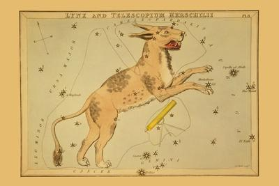 Lynx and Telescopium Herschilii-Aspin Jehosaphat-Stretched Canvas Print
