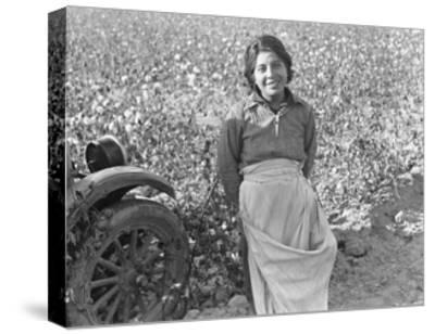 Cotton Picker-Dorothea Lange-Stretched Canvas Print