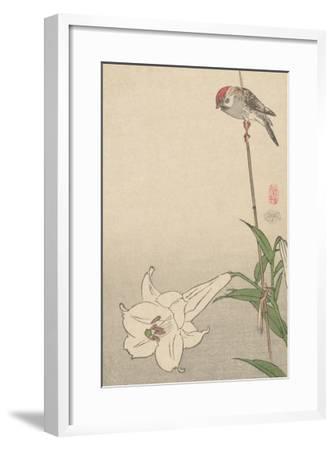 Small Bird on Lily Plant.-Baison-Framed Art Print