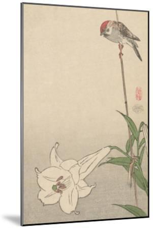 Small Bird on Lily Plant.-Baison-Mounted Art Print