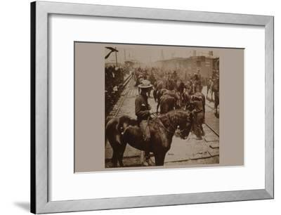 """Roosevelt's """"Rough Rider's"""" Arrival at Tampa, Fla., U.S.A.--Framed Art Print"""