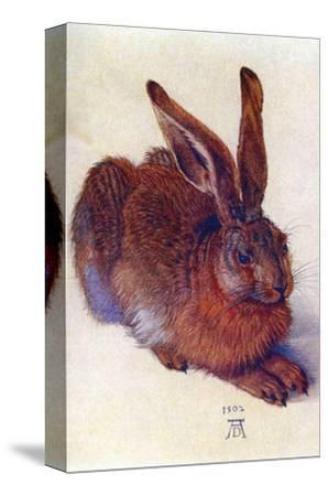 Field Hare-Albrecht D?rer-Stretched Canvas Print