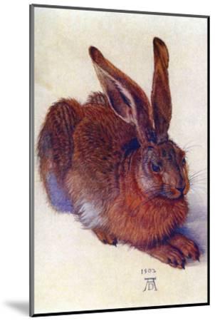 Field Hare-Albrecht D?rer-Mounted Art Print