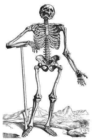 Vesalius: Skeletal System--Stretched Canvas Print