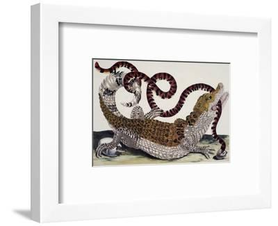 Crocodile and Snake-Maria Sibylla Merian-Framed Premium Giclee Print