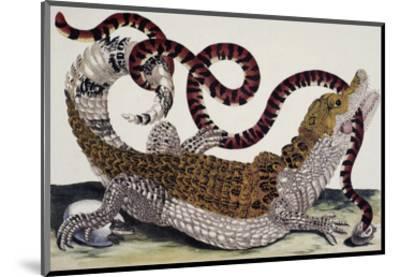 Crocodile and Snake-Maria Sibylla Merian-Mounted Premium Giclee Print