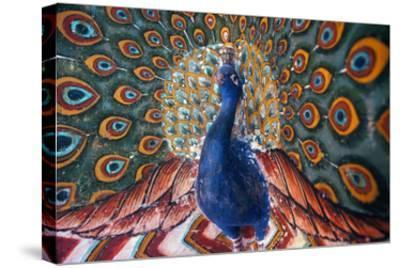 India: Peacock--Stretched Canvas Print