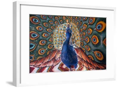 India: Peacock--Framed Giclee Print