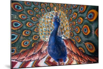 India: Peacock--Mounted Giclee Print