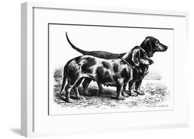 Dogs: Dachshunds--Framed Giclee Print