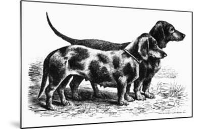 Dogs: Dachshunds--Mounted Giclee Print